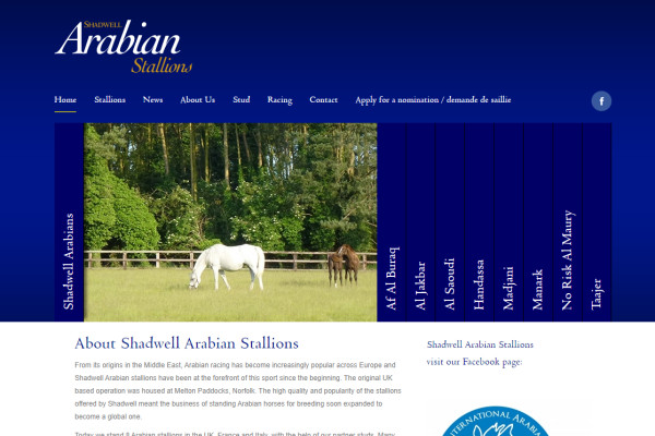 Shadwell Arabian